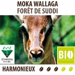 Moka Wallaga Forêt de Suddi BIO