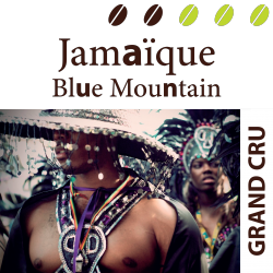 Jamaïque Blue Mountain